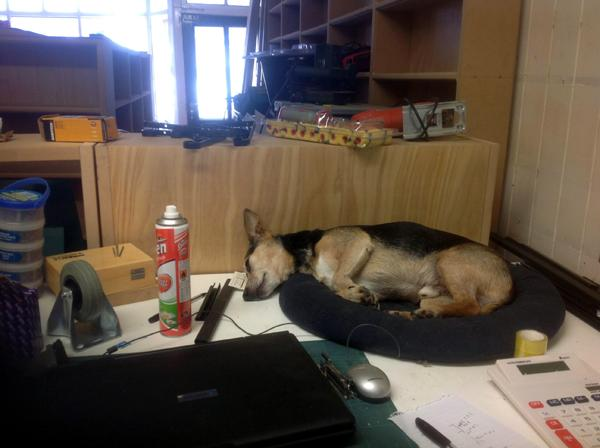 Yoda, the Shop Dog, takes a well earned rest